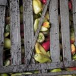 Завод овощных консервов. Репортаж.