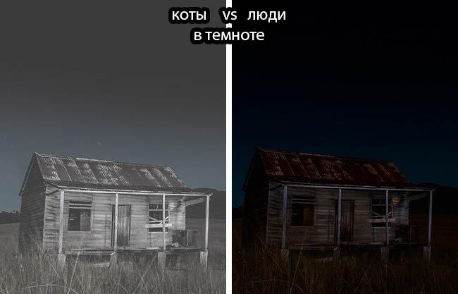 Кирилл Толль о профессиональной фотографии