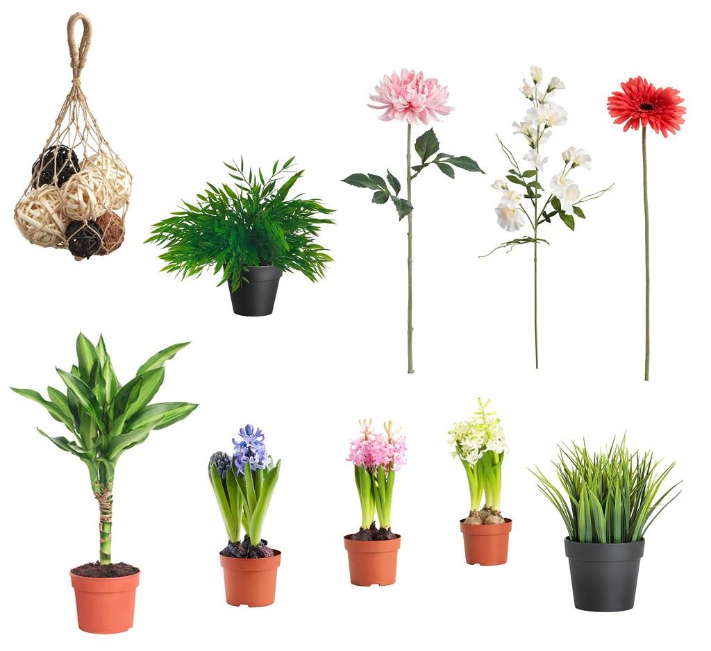 цветы для интерьерной фотосъемки квартиры